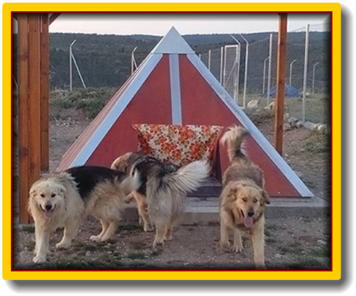 Pyramid Pets
